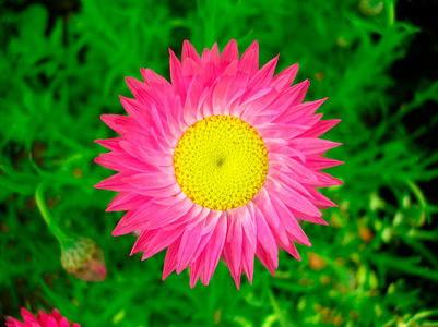 Fleurs et proxiphotographie